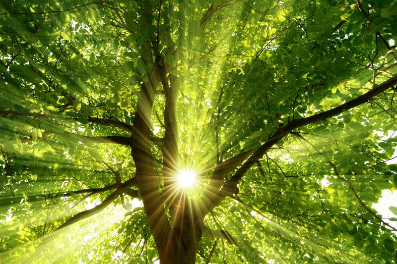 Klimaschutz - Warum Klimaschutz?